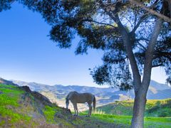 descansando en el monte Victoria     by <b>ramtto</b> ( a Panoramio image )