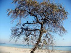 Toamna pe tarm.. by <b>Ghiocela</b> ( a Panoramio image )