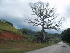 Arbol a orillas de la Interamericana Sur by <b>luissamudio</b> ( a Panoramio image )