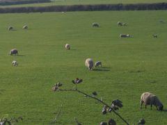Cashel, april 2007 by <b>Pom-Panoramio? YES !</b> ( a Panoramio image )