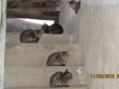 Abandoned Cats by <b>S?m?d</b> ( a Panoramio image )