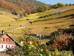 mb - For Gerry - Vineyard Ollon Vaud - not far from the lake of  by <b>? Swissmay</b> ( a Panoramio image )