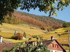 mb - Vineyard Ollon Vaud by <b>? Swissmay</b> ( a Panoramio image )