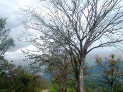 Lonely road / Camino solitario by <b>NancyMendez...</b> ( a Panoramio image )