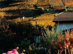 mb - Feuerwerk der Farben im Herbst  by <b>? Swissmay</b> ( a Panoramio image )