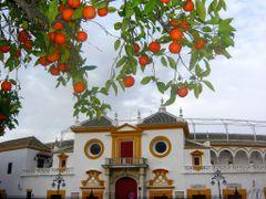 La Maestranza y Naranjas by <b>juanvi.fdz.-blanco</b> ( a Panoramio image )