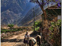 Transporte en Arque by <b>Justo Monroy</b> ( a Panoramio image )