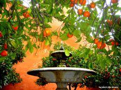Agua y Naranjos by <b>juanvi.fdz.-blanco</b> ( a Panoramio image )