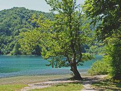 Plitvitsky lakes. Плитвицкие озера by <b>Buts_YV</b> ( a Panoramio image )