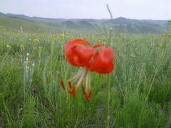 tsetseg sh de by <b>jagaa134</b> ( a Panoramio image )