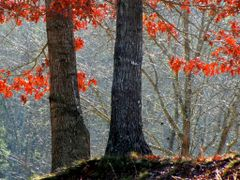 November Oak (i) by <b>jean~ge</b> ( a Panoramio image )