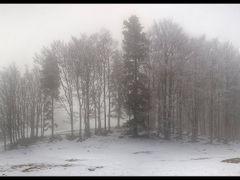 Oree du bois by <b>wx</b> ( a Panoramio image )