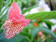 Flower at the Botanical Gardens  by <b>Pytka</b> ( a Panoramio image )