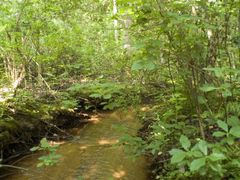 Big Timber Creek, Upper Stone Bridge Branch by <b>hoganphoto</b> ( a Panoramio image )