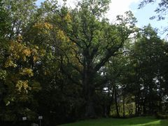 Tulivere tamm - the Oak of Tulivere by <b>Aulo Aasmaa</b> ( a Panoramio image )