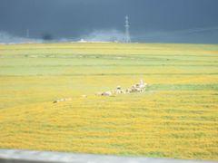 Paysage region de Settat by <b>Mhamed Zarkouane</b> ( a Panoramio image )