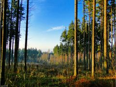 Las...[ks] by <b>Krystyna SIEG</b> ( a Panoramio image )