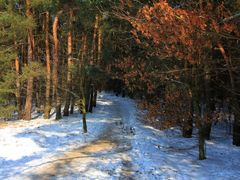 Forest path in winter time by <b>Maciejk</b> ( a Panoramio image )