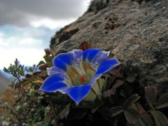 Flower and stone by <b>volnat</b> ( a Panoramio image )