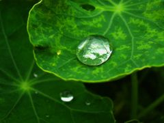 Dew Drop by <b>j. adamson</b> ( a Panoramio image )