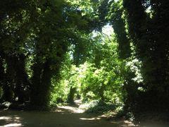 calle de Villa Ventana by <b>Federico Guerrero</b> ( a Panoramio image )
