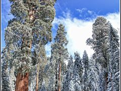 Winter in Sequoia National Park by <b>Elena Omelchenko</b> ( a Panoramio image )