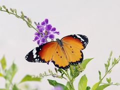 """""""Опавший лист"""" на крыльях бабочки ... """"Fallen leaf"""" on the wings by <b>Yuliya S.</b> ( a Panoramio image )"""