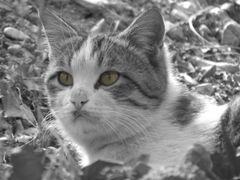 The CAT by <b>Без названия</b> ( a Panoramio image )