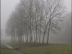 Maassluis - Trees by <b>Ria Maat</b> ( a Panoramio image )