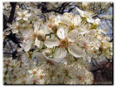 Пролет/Spring by <b>hadjiivan</b> ( a Panoramio image )