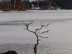 Bj by <b>drseek</b> ( a Panoramio image )