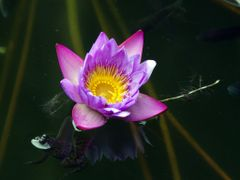 3F (frog, fish & flower) by <b>-NeveN-</b> ( a Panoramio image )