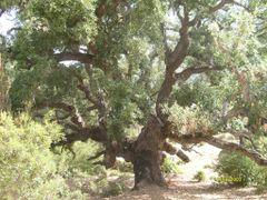 Tabarka - korkovnik, Tunisko by <b>moofy</b> ( a Panoramio image )
