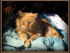 Sunning On Some Styrofoam & A Towel Someone Was Kind Enough To L by <b>joyfotos</b> ( a Panoramio image )