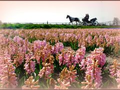 pink journey.....in een rijtuigje.... by <b>els f</b> ( a Panoramio image )
