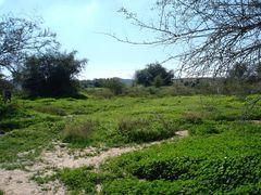 qeshm by <b>Ebrahim nikkhoo</b> ( a Panoramio image )