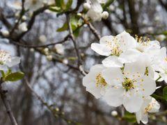 Springtime by <b>Mihai Adrian Popescu</b> ( a Panoramio image )
