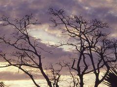 Evening by <b>Alan.L</b> ( a Panoramio image )