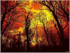 в парка by <b>mfilev</b> ( a Panoramio image )