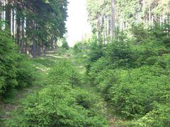 pohled od Kocicaku na Kocici vrch by <b>kesuob</b> ( a Panoramio image )