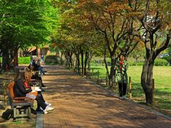 Greens at the Campus,  Seoul by <b>Danielcarlsbad</b> ( a Panoramio image )