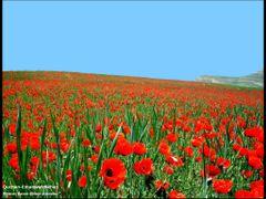 Без названия by <b>?Berat Qevi Endam</b> ( a Panoramio image )