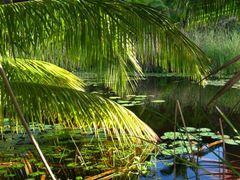 Seychelles lagoon by <b>Daniel Balazs Harcz</b> ( a Panoramio image )