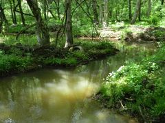 Big Timber Creek, Otter Brook below Gravelly Run by <b>hoganphoto</b> ( a Panoramio image )