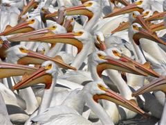 Multitud-Crowded by <b>J.Ernesto Ortiz Razo</b> ( a Panoramio image )
