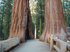 Sequoia NP by <b>miro59</b> ( a Panoramio image )