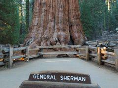 Sequoia NP General Sherman by <b>miro59</b> ( a Panoramio image )