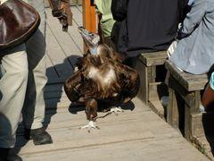 A new kind of doggy :) Новый вид собачки :) by <b>sanja.byelkin</b> ( a Panoramio image )
