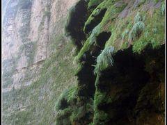 Canon del Sumidero, Arbol de Navidad by <b>travelerosmx</b> ( a Panoramio image )