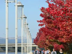 Autumn in Canberra by <b>Paul Strasser</b> ( a Panoramio image )